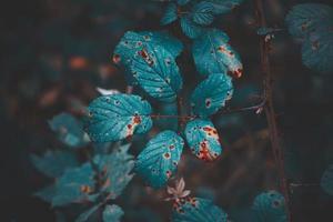 groene plant bladeren in het voorjaar foto
