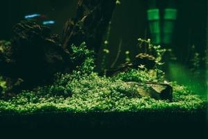 exotische vissen in een verzamelaquarium foto