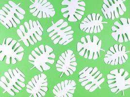 witte monstera papieren bladeren op groene achtergrond. foto