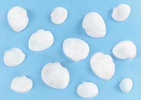 witte zeeschelpen op een blauwe achtergrond. foto