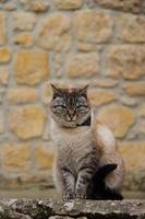 thuis dikke kat op straat foto