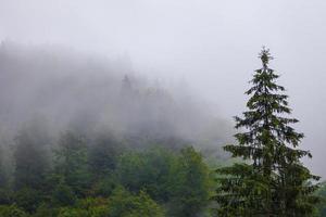 mistig bos tijdens het herfstregenseizoen foto