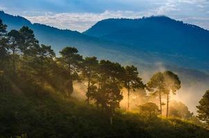 aardbeienplantages in de ochtend hebben een zee van mist ang khang chiang mai thailand foto