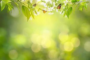 bloem blad achtergrond bokeh vervagen groene achtergrond foto