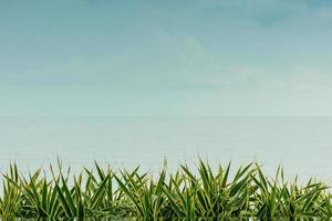 gras hemel zee achtergrond foto