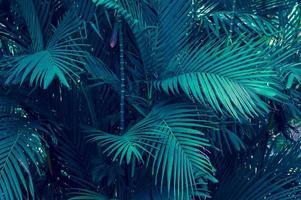 bladeren abstract palm tropische bladeren kleurrijk bloem op donker tropisch gebladerte natuur achtergrond donkerblauw gebladerte nature foto