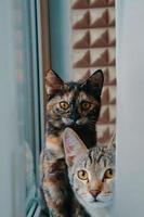twee huiskatten kijken naar de camera. foto