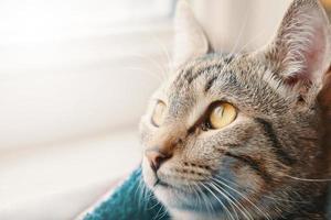 gestreepte kat close-up. foto