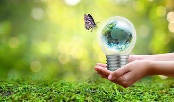 de bol zit aan de binnenkant met bladeren bos en de bomen staan in het licht. concepten van milieubehoud en het broeikaseffect dat in de gloeilamp over droog groeit over foto