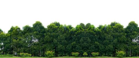 panorama boom witte achtergrond banner foto