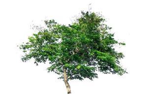 geïsoleerde bomen op witte achtergrond foto