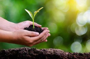 milieu aarde dag in de handen van bomen die zaailingen kweken. bokeh groene achtergrond vrouwelijke hand met boom op natuur veld gras bosbehoud concept foto