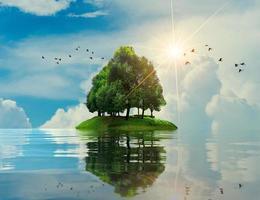 eiland zee boom zomervakantie relax boom midden in de zee foto