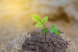 dorre bodem jonge boompjes natuurbehoud preventie opwarming van de aarde foto