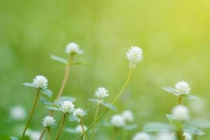 bladeren vervagen vers groen gras ondiepe dof natuurlijke groene planten landschap gebruiken als achtergrond of behang foto
