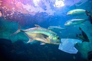 vissen eten plastic zakken onder de blauwe zee. milieubeschermingsconcepten en geen afval in zee gooien. foto