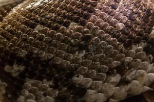 huid van slang foto