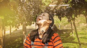 gelukkige jonge vrouw tuinders openden mond met trossen rijpe druiven op wijnstokken voor de oogst in de tuin. foto