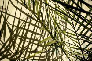 een huisplant die schaduwen werpt op de muur foto