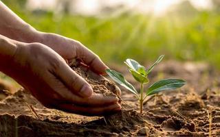 close-up van een menselijke hand die een zaailing vasthoudt, inclusief het planten van de zaailingen, het concept van de dag van de aarde en de campagne voor het verminderen van de opwarming van de aarde. foto