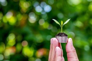 de boom groeit duurzaam op een munt in mensenhanden inclusief wazige groene natuurachtergrond foto