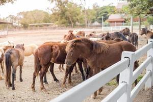 paarden in het veld foto