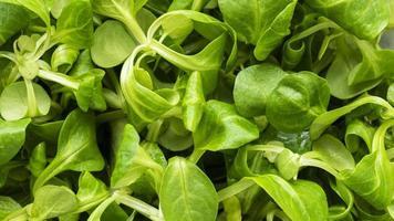 voedzaam voedsel textuur samenstelling close-up foto