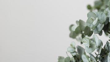 stilleven arrangement bloemen met groene plant foto