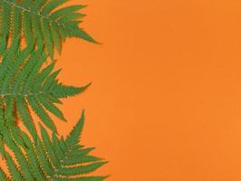groene varenbladeren op oranje achtergrond met kopieerruimte. foto