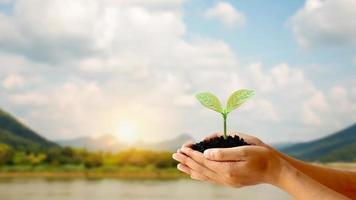 bomen worden in menselijke handen op de grond geplant met natuurlijke groene achtergronden, het concept van plantengroei en milieubescherming. foto