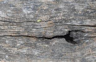 oude houtstructuur achtergrond foto