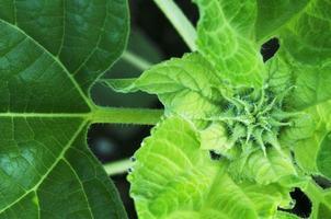 close-up van groen blad met waterdruppel voor natuurachtergronden hierboven foto