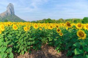 bloeiende zonnebloemen op natuurlijke achtergrond foto