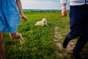 gelukkige hond rust uit met de eigenaar in de natuur. veel plezier met haar hond in het park foto