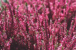decoratieve magenta bloemen florale achtergrond met kopie ruimte ondiepe scherptediepte foto