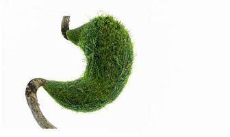 menselijke maag gevormd door groene bomen, milieuconcept foto