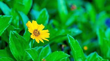 verse gele bloem die op de achtergrond van de tuintextuur groeit foto