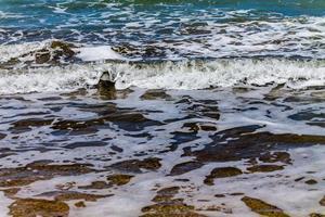langs de kustlijn op narrows neck beach, auckland, nieuw-zeeland foto