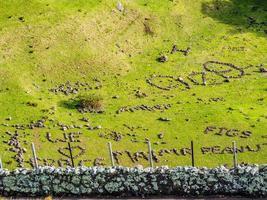 bedrading in stenen in de Mount Eden Crater, Auckland, Nieuw-Zeeland foto