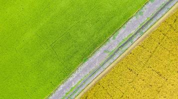 bovenaanzicht vanuit de lucht van groen en geel rijstveld van bovenaf foto
