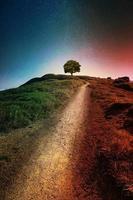 boom op de achtergrond van het natuurlandschap foto