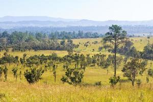 thung salaeng luang nationaal park. savanneveld en pijnboom. phetchabun en de provincie phitsanulok. noorden van thailand. landschapsmening foto