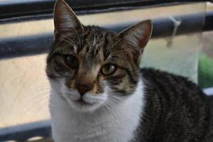 het kattenportret foto