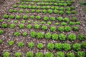 de saladeplantage foto