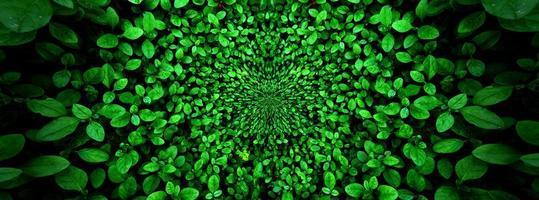 tropisch groen blad, contrast foto