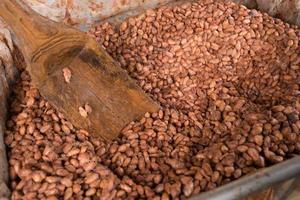 gefermenteerde en verse cacaobonen die in de houten kist liggen foto