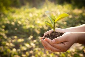 bokeh groene achtergrond vrouwelijke hand met boom op natuur veld gras bosbehoud concept foto