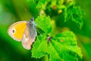 vlinder op de bloem foto