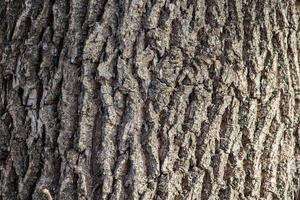 achtergrond van natuurlijke bruine boomschors foto
