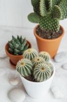 cactussen en vetplanten in potten op tafel foto